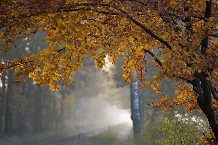 Rain Tag - Rain Autumn Roads Fall Trees Nature Wallpaper Full Hd For  Desktop Free Download