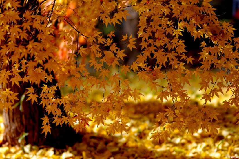 Autumn wallpapers ...