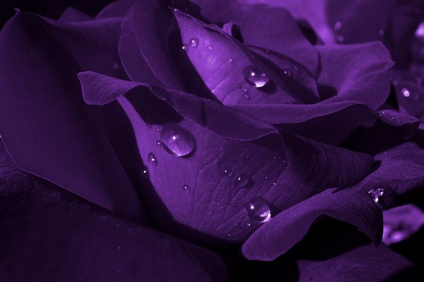 Purple · HD Wallpapers 1080p Purple Rose 9