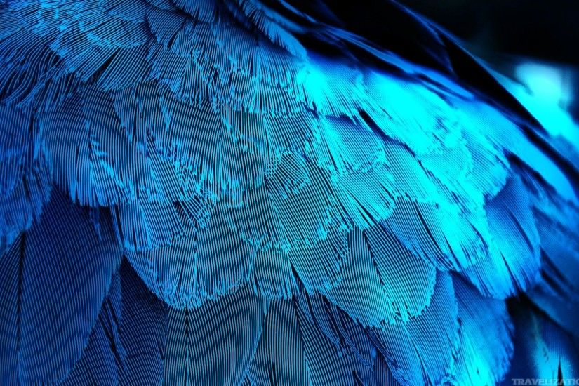 blue bird feathers wallpapers 1920x1080jpg 1920x1080