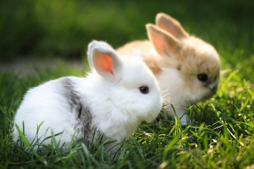 Baby Bunny Cool HD Wallpapers Picture on ScreenCrot.