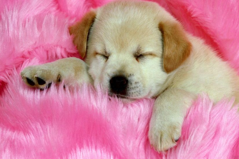 Cute Baby Puppies Sleeping