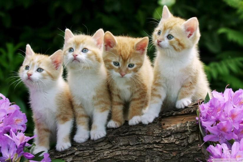 free download kitten wallpaper 1920x1080 for android