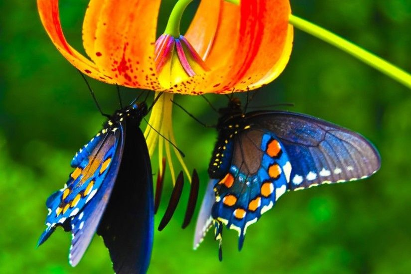 Nature Butterfly Cool Wallpaper