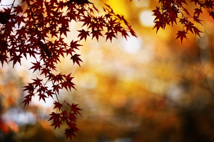 Red Foliage Bokeh Mac Wallpaper ...