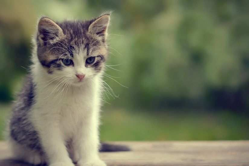 Thibaud Despres - Cute Baby Cats Cat Kittens Kitten Wallpaper Animals for  HD 16:9