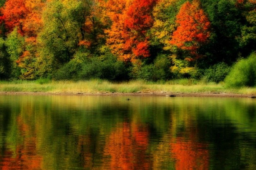 Woods Tag - Autumn Colorful Grass Peaceful Lake Colors Tree Trees Nature  Woods Beauty Forest Beautiful