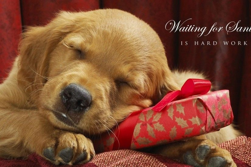 Puppy Christmas Wallpapers Wallpaper Cave