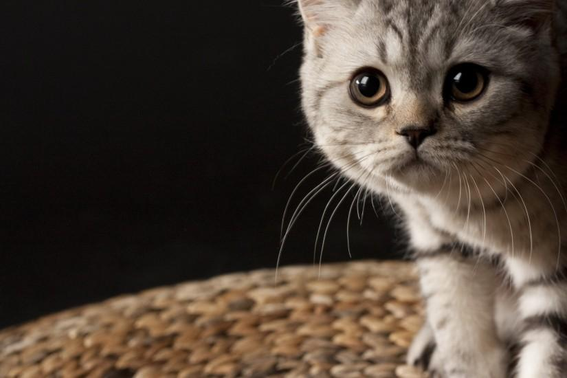 6225 Cat HD Wallpapers | Backgrounds -