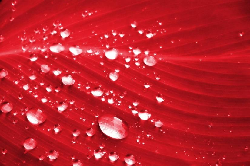 520 Water Drop Wallpapers | Water Drop Backgrounds Page 15