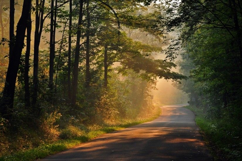 nature tree tree leaves path track sun rays day trees background wallpaper  widescreen full screen widescreen