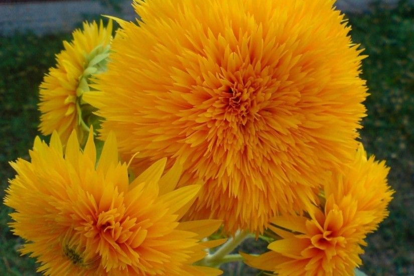 Nature Flowers Yellow Orange Colors Hd Wallpaper | HD Flowers Wallpaper  Free Download ...