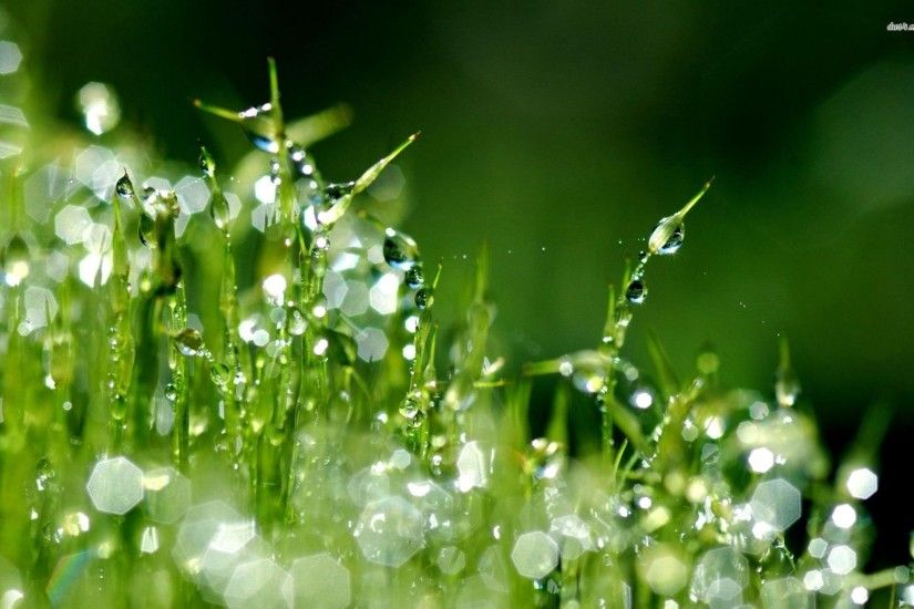 Raindrops HD Wallpapers Backgrounds Wallpaper