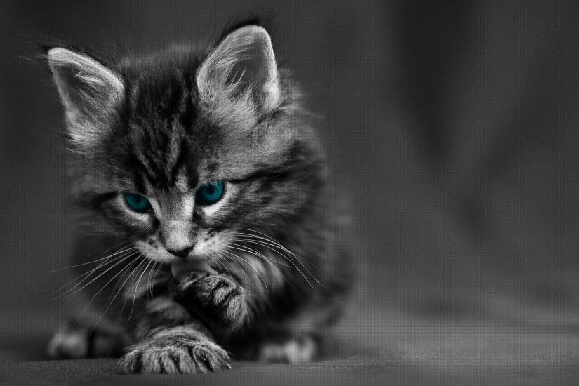 Preview wallpaper cat, black white, blue, eyes, baby, beautiful 3840x2160