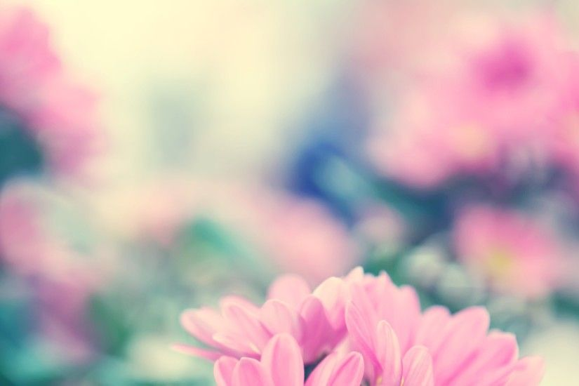 Spring Flowers Background Free Download.