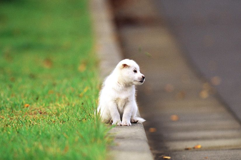 Cute Puppies On The Street Wallpaper Background Wallpaper