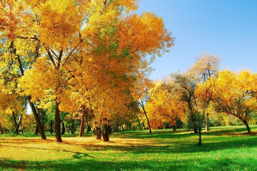 Autumn park hd desktop wallpaper wallpapers free to - (#25720 .