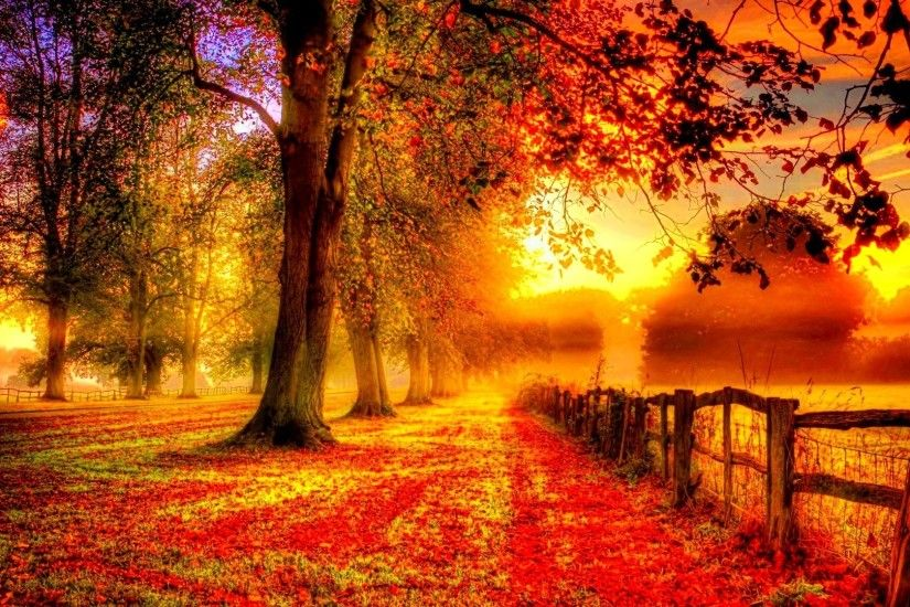 Forest Color Fall Season Autumn Landscape Tree Nature Hd Wallpapers For  Iphone 6 - 1920x1080