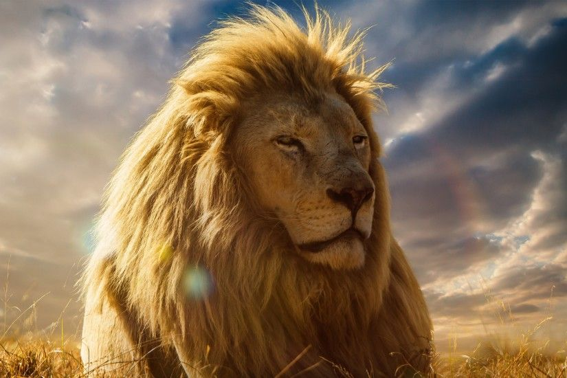 Preview wallpaper lion, king of beasts, mane, savannah 3840x2160