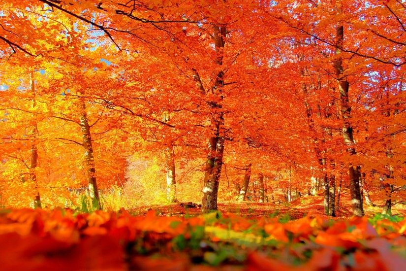 Best Autumn Background. Â«