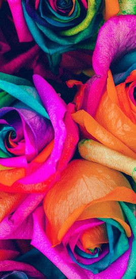 Rainbow Flower Rose Color Art 2 Galaxy Note 8 Wallpaper