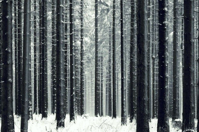 Slender winter forest wallpapers and images - wallpapers, pictures .