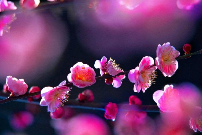 D Pink Flowers Background Wallpaper x Cool PC