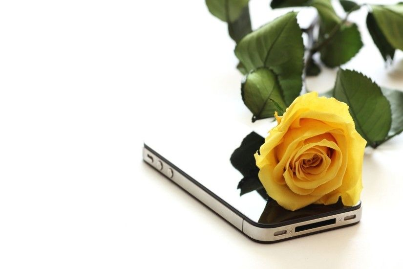 Beautiful Yellow Rose Flower Wallpaper For Desktop