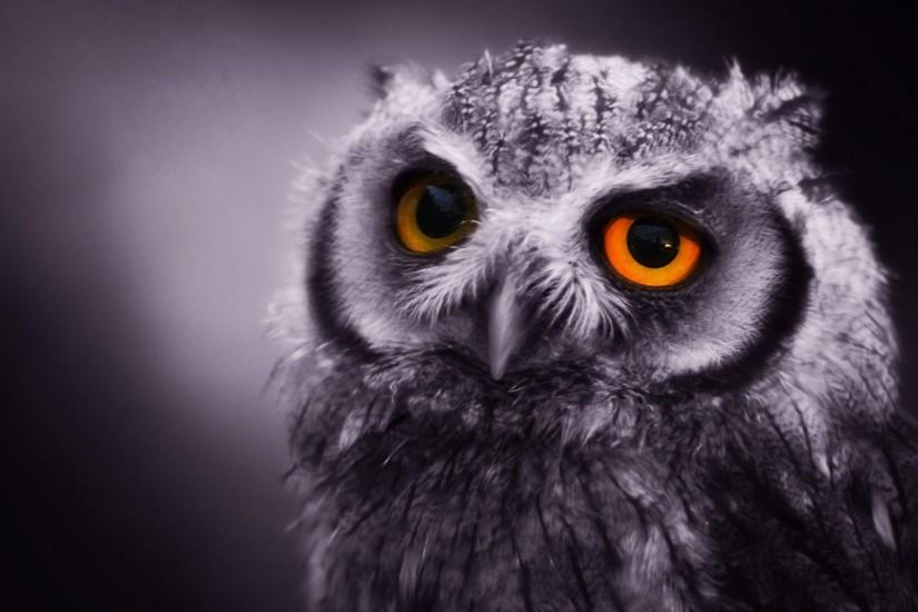 owl-wallpapers free picture