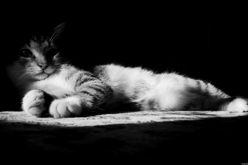Images of black and white cat wallpaper