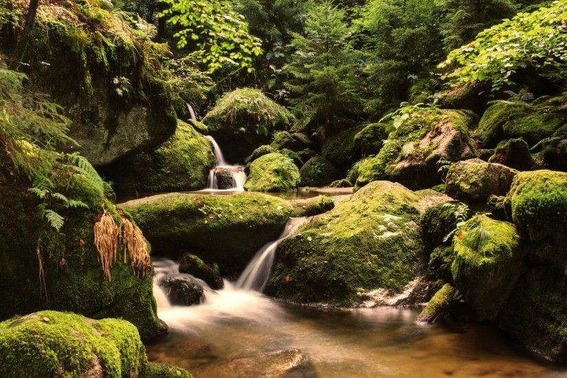 stones moss black forest forest cry germany repair cascade