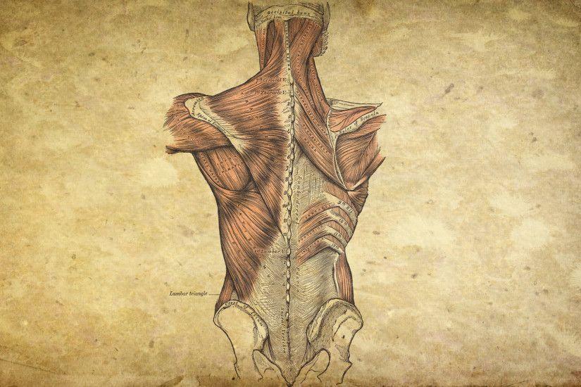 Brain Anatomy Wallpaper