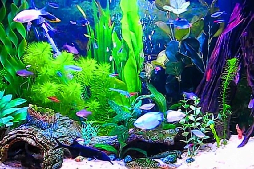 HD Aquarium ScreenSaver Free Windows and Android Full HD - YouTube .
