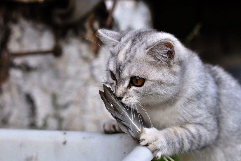 Cats - Playing Lovely Cat Pictures Hd for HD 16:9 High Definition 1080p 900p