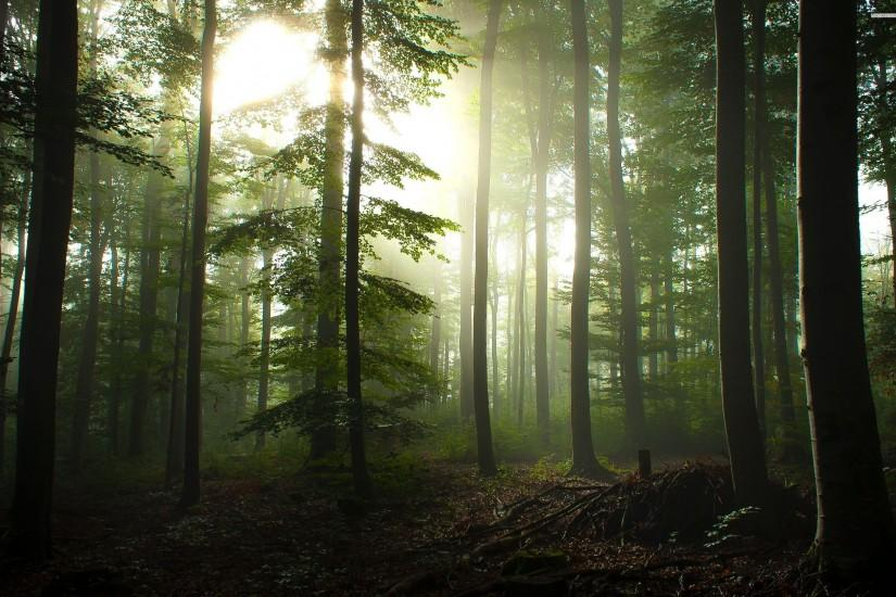 ... hd-wallpaper-of-forest ...