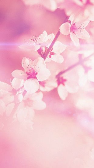 Pictures of flowers for cell phone. Pink Wallpaper ...