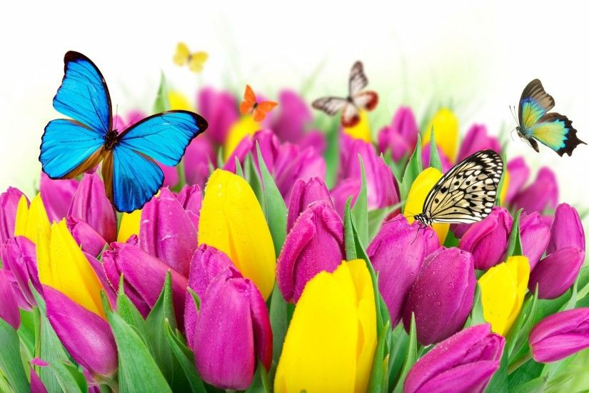 Preview wallpaper tulips, flowers, butterflies, colorful 1920x1080