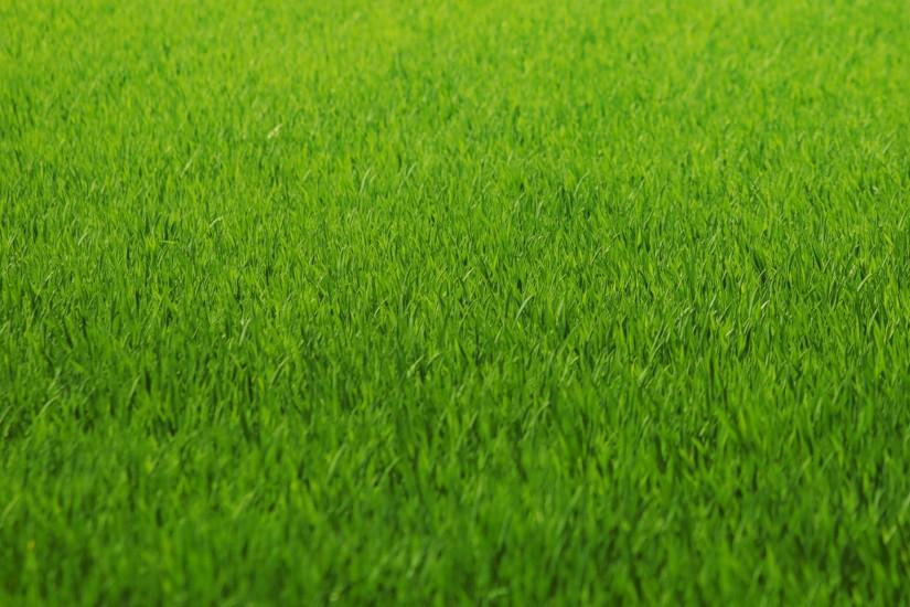 most popular grass wallpaper 2560x1600