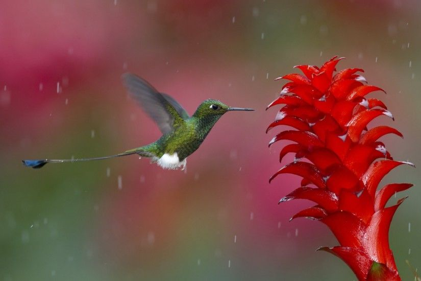 bird on flower in rain wallpaper - hd wallpapers
