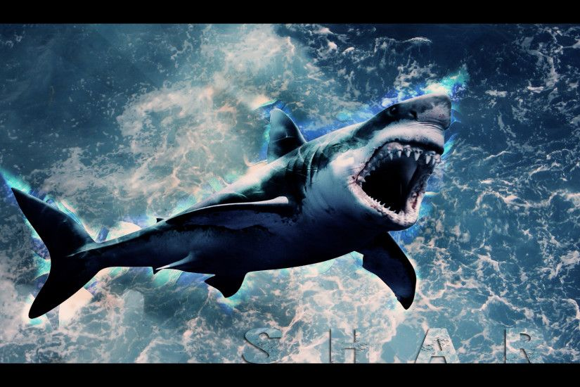 Shark Wallpaper HD by animals bg deskop