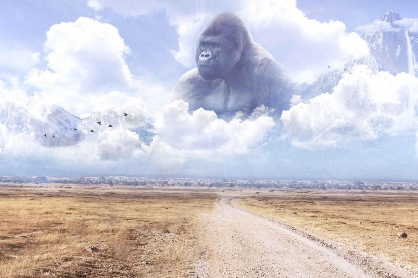 new harambe wallpaper 2048x1152