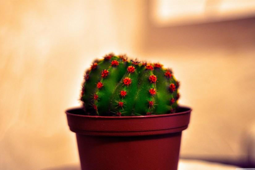 Potted Cactus wallpapers | Potted Cactus stock photos