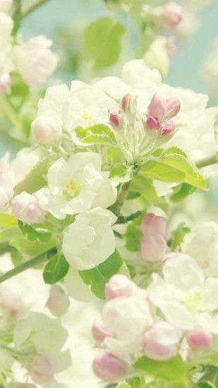 Nature Pure Spring Flower Branch #iPhone #7 #wallpaper