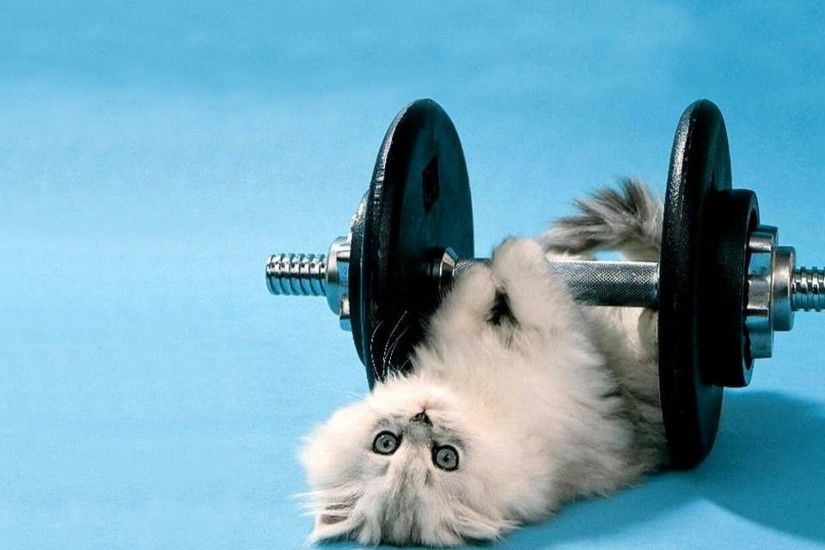 Funny Cat Weight Lifting Wallpaper
