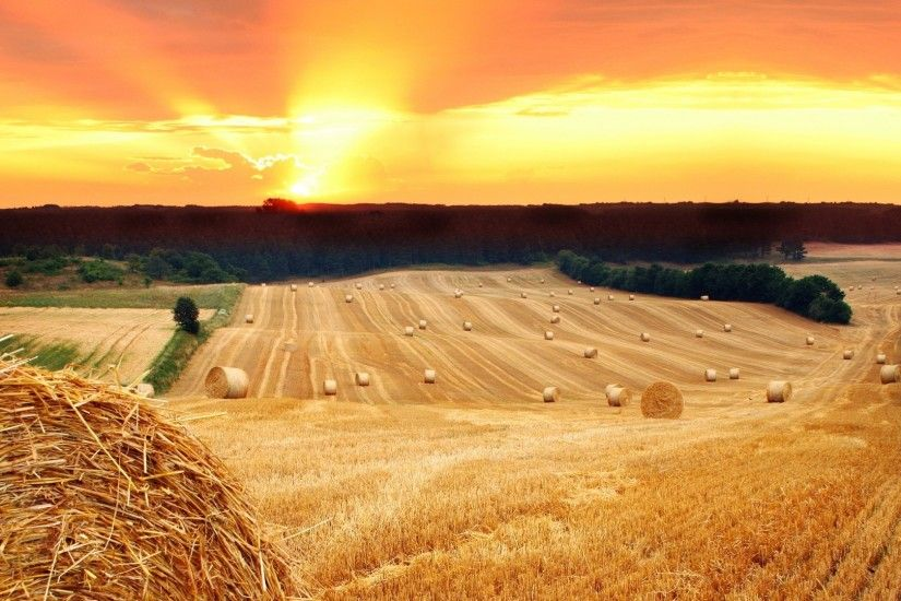 Hay Field Wallpaper | Description: The Wallpaper above is Summer field hay  sunset Wallpaper .
