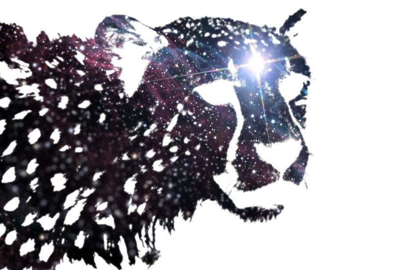 1920x1080 - cheetah, shadow art, black and white, light # original  resolution. cheetah wallpapers ...