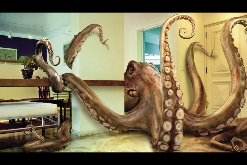 Octopus Wallpaper 187333