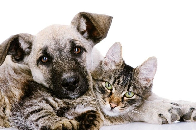 Cats Dogs Wallpapers HD Cute Puppies Kittens by SpaceO Infoweb 1920x1080