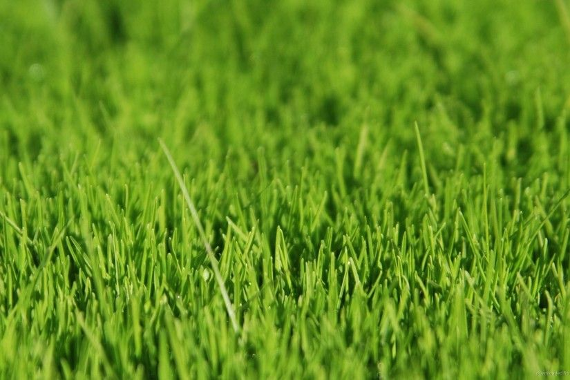 Grassland Background 412594