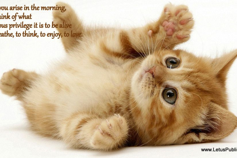 ... Cat Adorable Gallery For: Good Morning Wallpapers, Good Morning  Wallpapers, Top And also Delightful ...